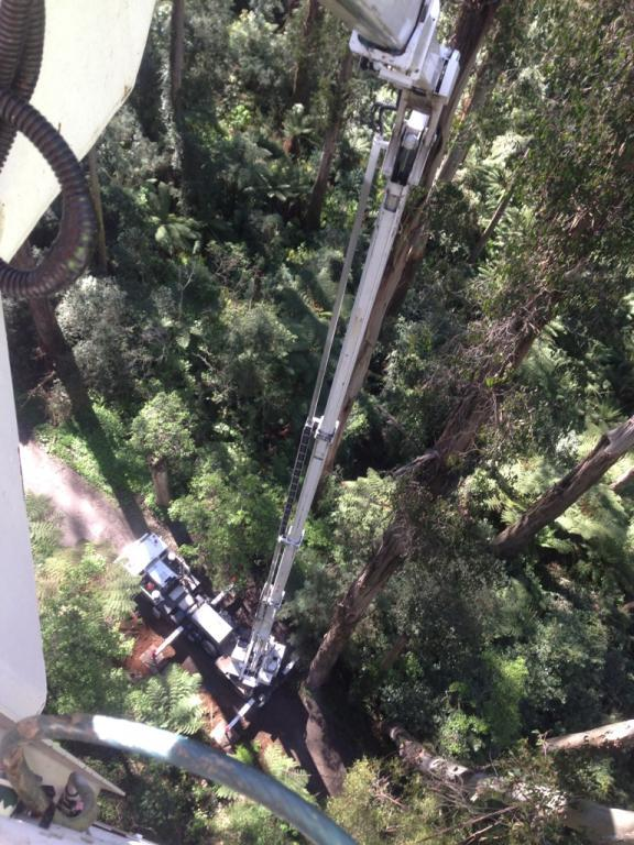 Tree Loping Travel Tower